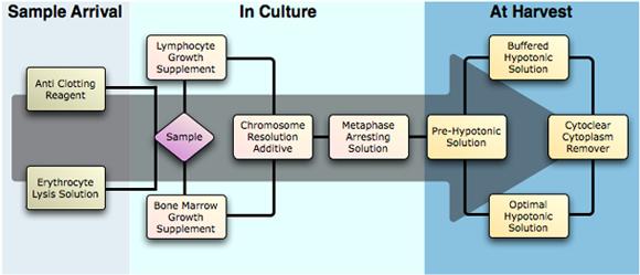procell_diagram2